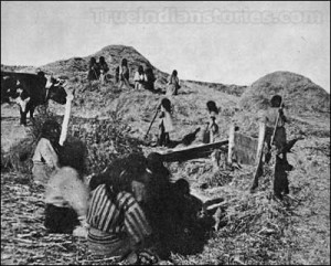 Threshing scene at Snake River Agency, Fort Hall, Idaho.